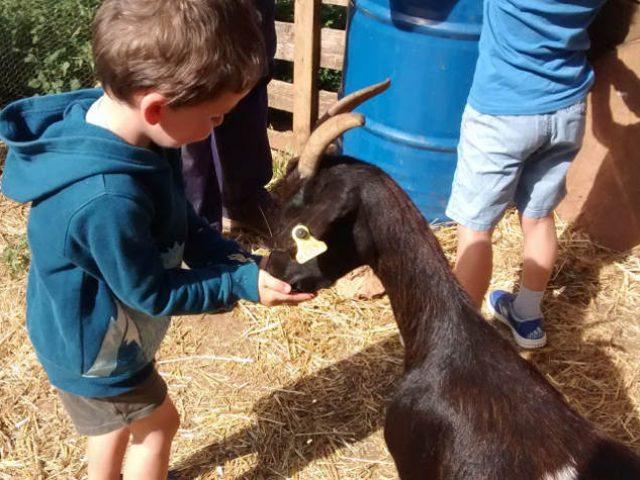 Hoteles con granja/animales